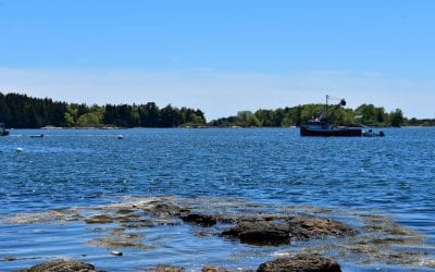 A Warming Gulf of Maine Explained