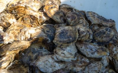 5 Reasons to Eat Gulf of Maine Seafood